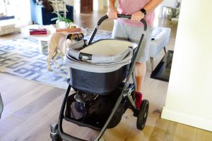 Call me Lore's frenchie in Uppa Baby Stroller