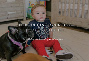How to Introduce Your Dog to Your Baby poundWISHES Call Me Lore